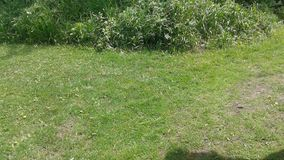 Grass at School stock image