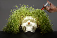 Grass scull Royalty Free Stock Photo