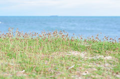 Grass beside the sea Stock Photography
