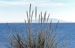 Grass by the sea Royalty Free Stock Images
