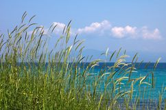 Grass, sea ans blue sky Royalty Free Stock Photo