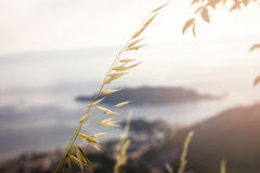Grass by the sea Stock Photography
