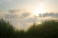 Grass on sea coast Stock Images