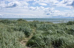 Grass sea shore. Ireland, Dublin. Stock Images