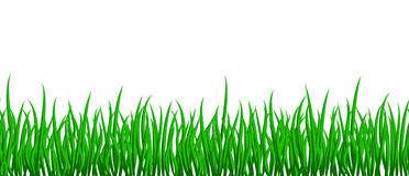Grass seamless Royalty Free Stock Photos