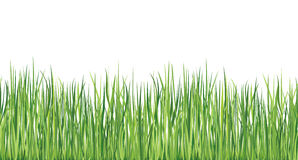 Grass seamless border. Vector Illustration. Stock Photography