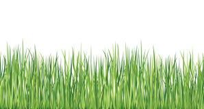 Grass seamless border. Vector spring background.