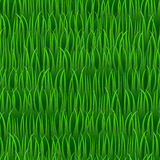 Grass seamless vector background Stock Photography