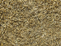 Grass Seed Abstract. Variety of grass seed closeup stock photos