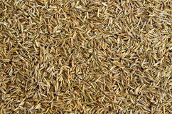 Grass seed background. Macro detail of grass seed background Stock Photo