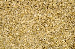 Grass seed Stock Photo