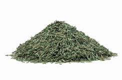 Grass Seed Royalty Free Stock Image