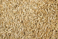 Grass Seed. Ready planting background texture royalty free stock photos