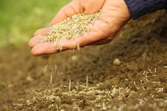 Grass seed sowing. Grass lawn seed sowing in to the garden soil with hand. The most suitable time for sowing the seeds of grasses is spring and autumn. In spring Royalty Free Stock Images