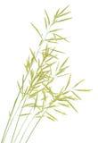 Grass seed stalks Royalty Free Stock Photos