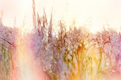 Grass seeds, beautiful landscape in meadow stock image