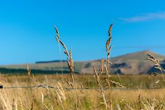 Grass seeds on a fence line royalty free stock photos