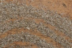 Grass seeds. On old wood board royalty free stock images