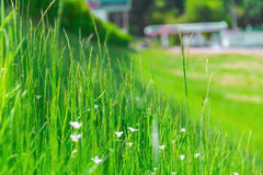 Grass selective focus, It is growing on the hill. The road on the background Stock Photography