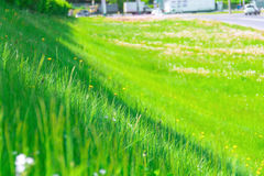 Grass selective focus. It is growing on the hill, the road on the background Stock Image