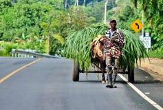 Grass seller Stock Image
