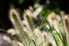Grass Serenity. Serene and soft scene of plants and grass stock image