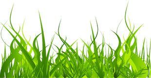 grass set Stock Photo