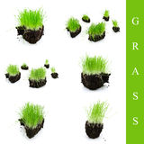 Grass set Royalty Free Stock Photography
