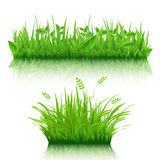 Grass Set Royalty Free Stock Photo