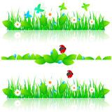 Grass set. Vector beautiful grass set with daisies, water drops, butterflies and ladybug Stock Photo