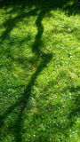 Grass and shadow. Green grass under the shade Stock Image