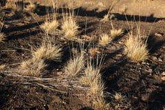 Grass and shadows on Moana Kea Stock Photo