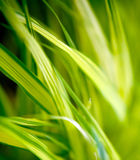 Grass Shapes Royalty Free Stock Photos