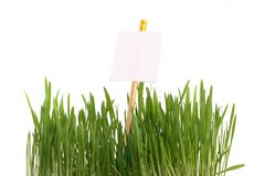 Grass with a sheet for the information Stock Photo