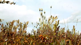 Grass shivering in  wind stock video footage