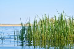 Grass on the shore of a lake royalty free stock photo
