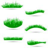 Grass, shrubs. Different types of grass to illustrate Stock Photo