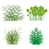 Grass, shrubs. Different types of grass to illustrate Stock Image