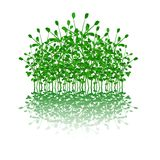 Grass, shrubs. Different types of grass to illustrate Royalty Free Stock Images