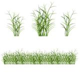 Grass, shrubs. Different types of grass to illustrate Royalty Free Stock Photography