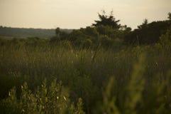 Midsummer morning at Allens Pond stock photography