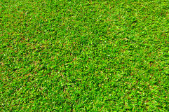 Grass in Siam Stock Images