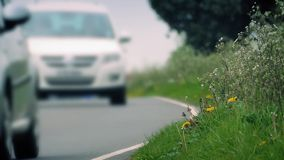 Grass At Side Of Road With Passing Cars stock video footage