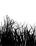 Grass silhouette Stock Photos