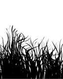 Grass silhouette Stock Photos