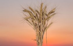 Grass Silhouette Against Sunset Royalty Free Stock Photo