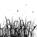 Grass silhouette black Royalty Free Stock Images