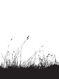 Grass silhouette black Stock Images