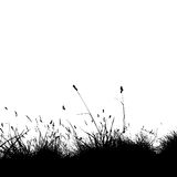 Grass silhouette black Royalty Free Stock Photo