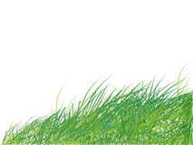 Grass green, summer Royalty Free Stock Photo